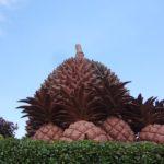 【カンポット観光】ドリアンと胡椒は超絶品!郊外にはボーコー国立公園もあるよ!