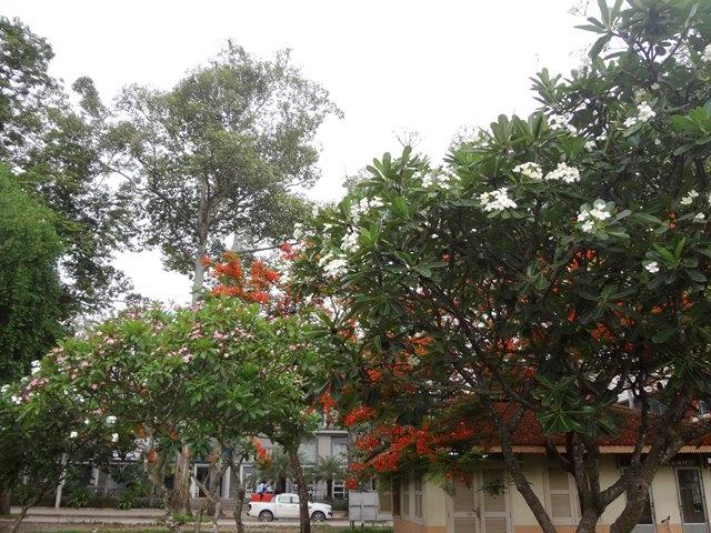 ロイヤルガーデンの色とりどりの花