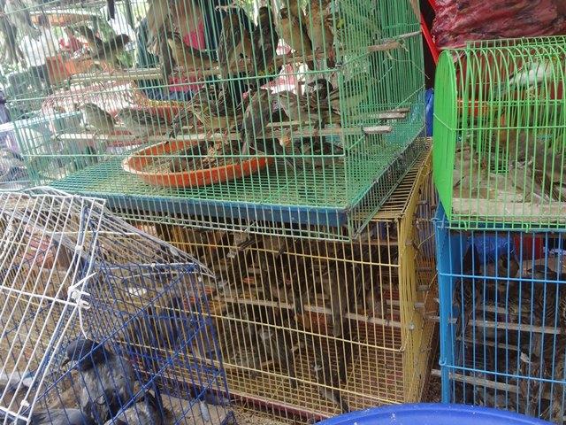 参拝者用の籠の中の鳥