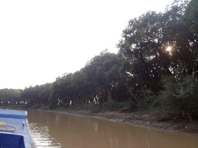 トンレサップ湖のマングローブ