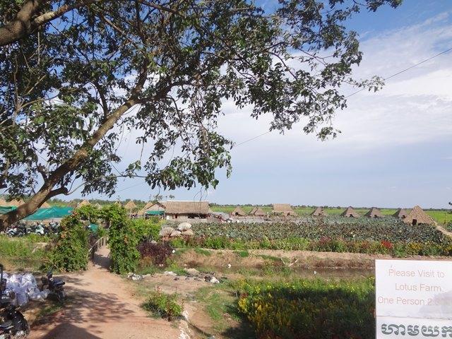 カンボジア・シェムリアップのロータス・ファーム