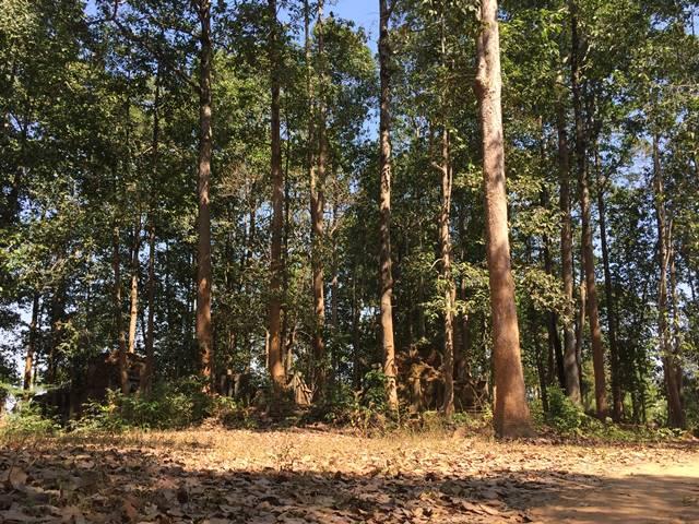 森の中のプレイ・モンティ