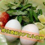孵化直前のアヒルの卵「ポーンティアコーン」