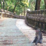 コンポントムのお猿の多い寺院「プノンサントゥック」に行ってきた