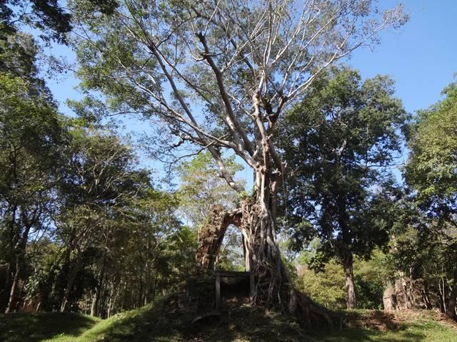 自然と遺跡の融合。プラサット・イェイ・ポアン