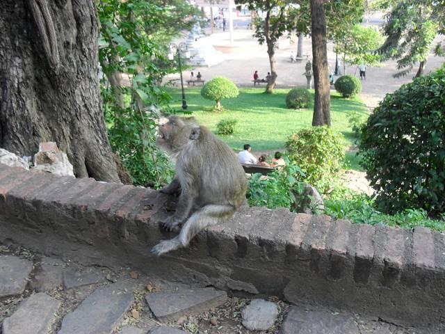 ワットプノンのお猿