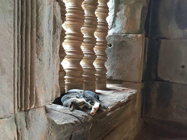 遺跡で眠るネコ