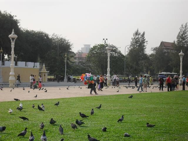 プノンペンの王宮前広場のハト