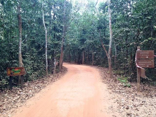 タネイへの小道