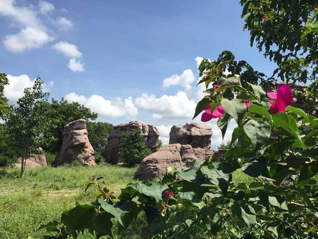 プーンタノンに咲く花