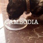 カンボジアの動画をつくってみた