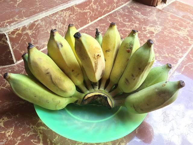 ふと短い黄色のバナナ