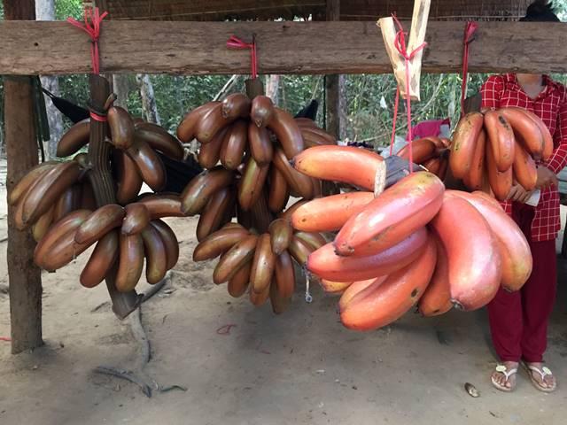 珍しい赤いバナナ