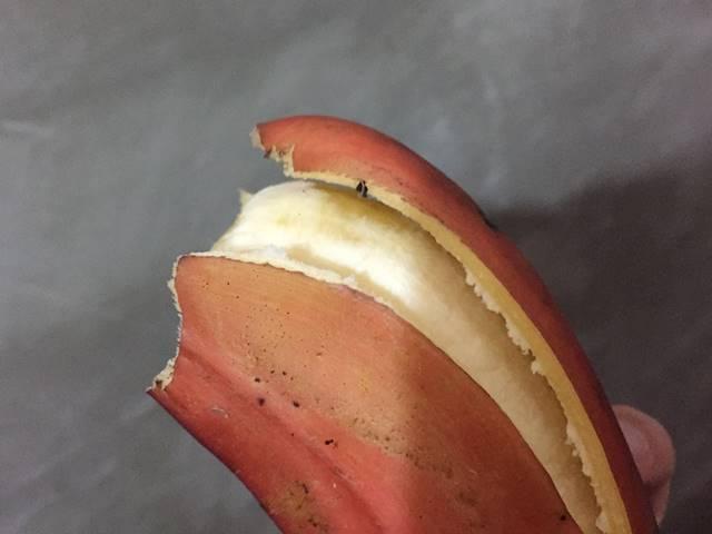 リンゴのような皮の赤バナナ