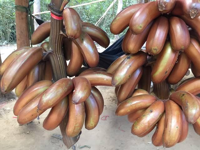 まだ熟してない黒っぽい赤バナナ