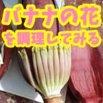 バナナの花を食べてみよう!